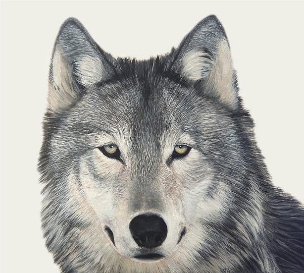 "Arctic Wolf - 18"" x 20"""