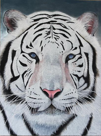 """White Tiger - 36"""" x 48"""""""
