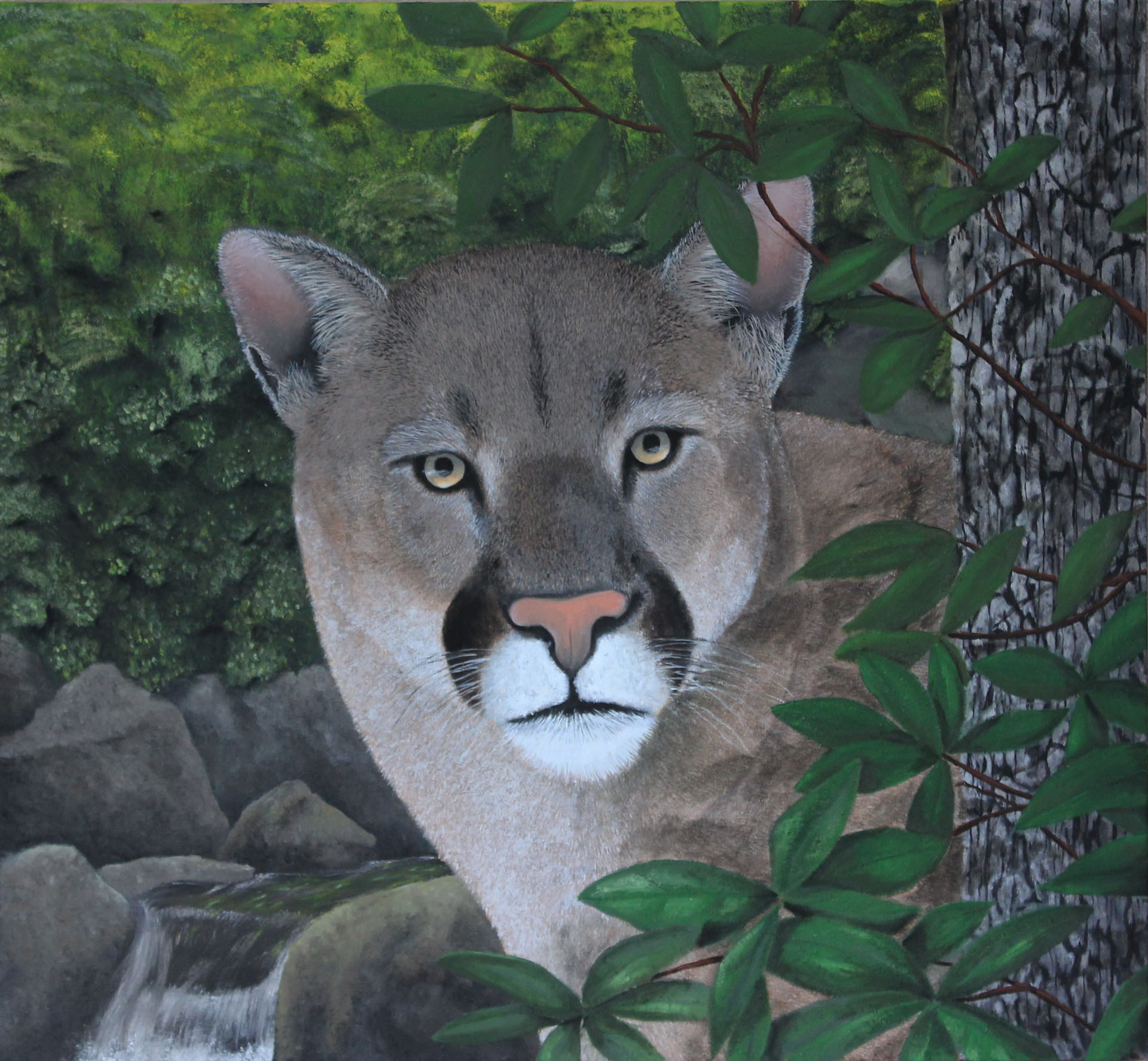 Mountain Lion - 24 x 26""