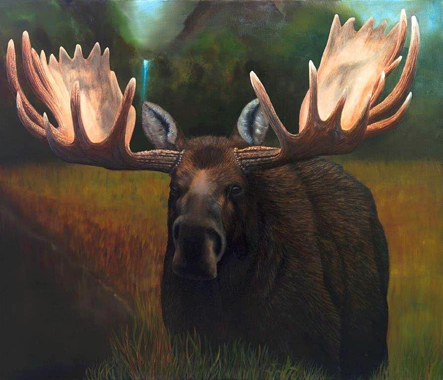 moose 1_edited