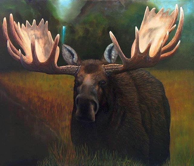 "Moose - 36""x42"""