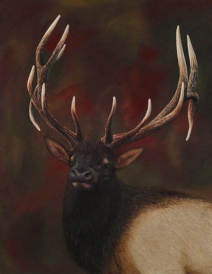 "Elk - 36"" x 46"""