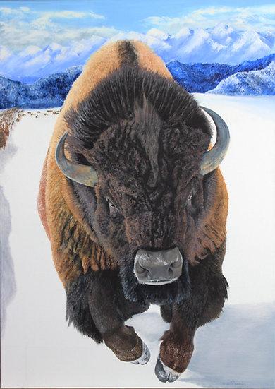 "Buffalo - 30 x 42"""