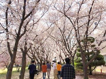 TELab spring photos