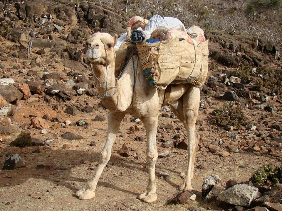 Socotra Expeditions trekking