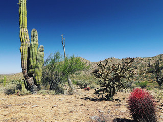 Next Adenture: Baja California April 2021
