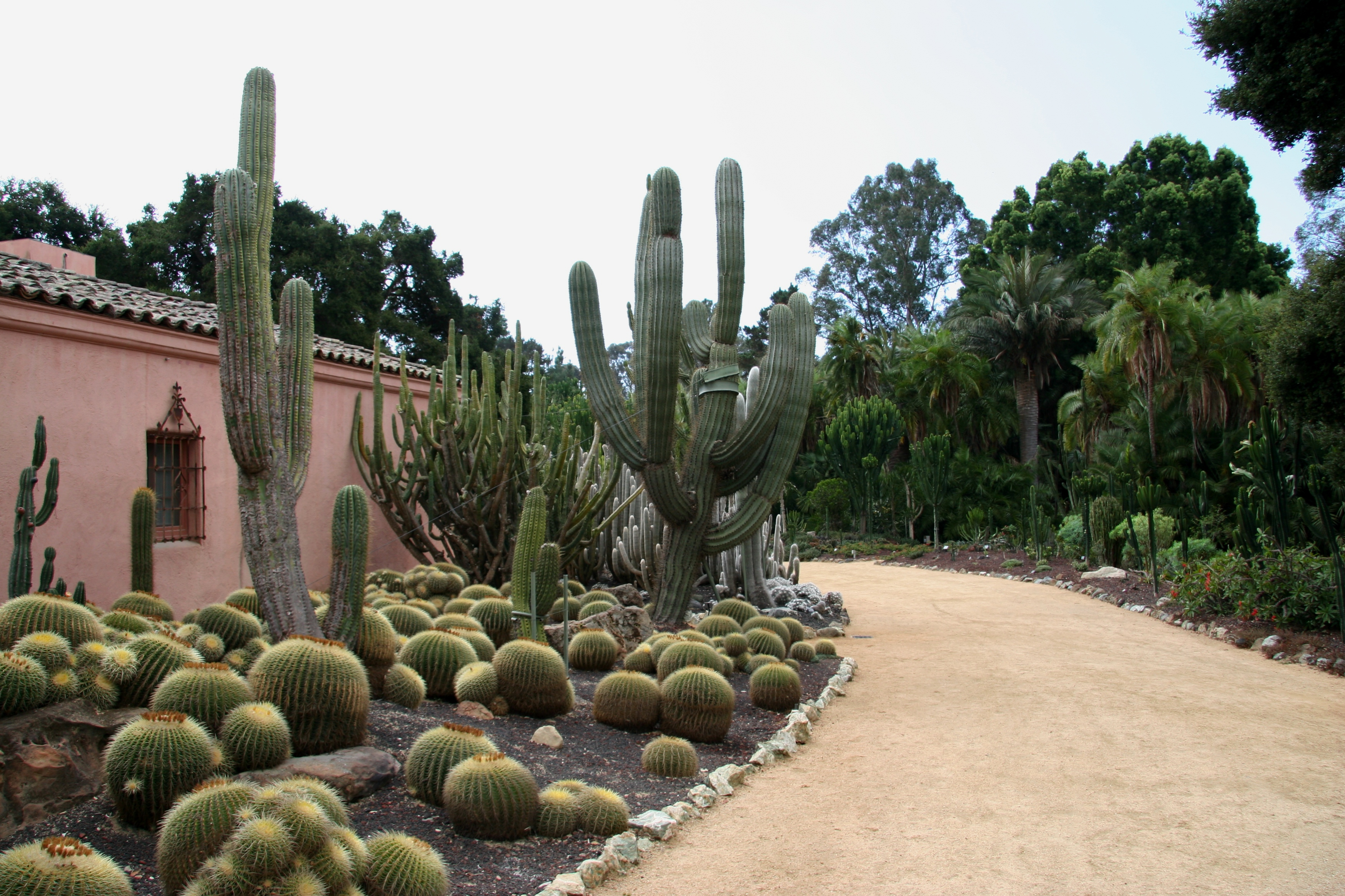 Flickr_-_brewbooks_-_Cacti_and_euphorbia_garden,_Lotusland_(6)