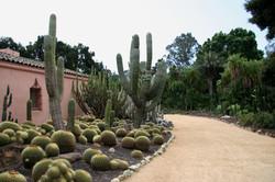 Flickr_-_brewbooks_-_Cacti_and_euphorbia_garden,_Lotusland_(6)