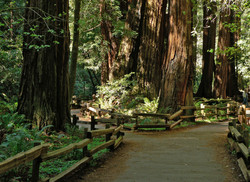 Muir_Woods_National_Monument