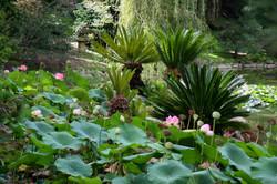 Flickr_-_brewbooks_-_Japanese_Garden,_Lotusland_(3)