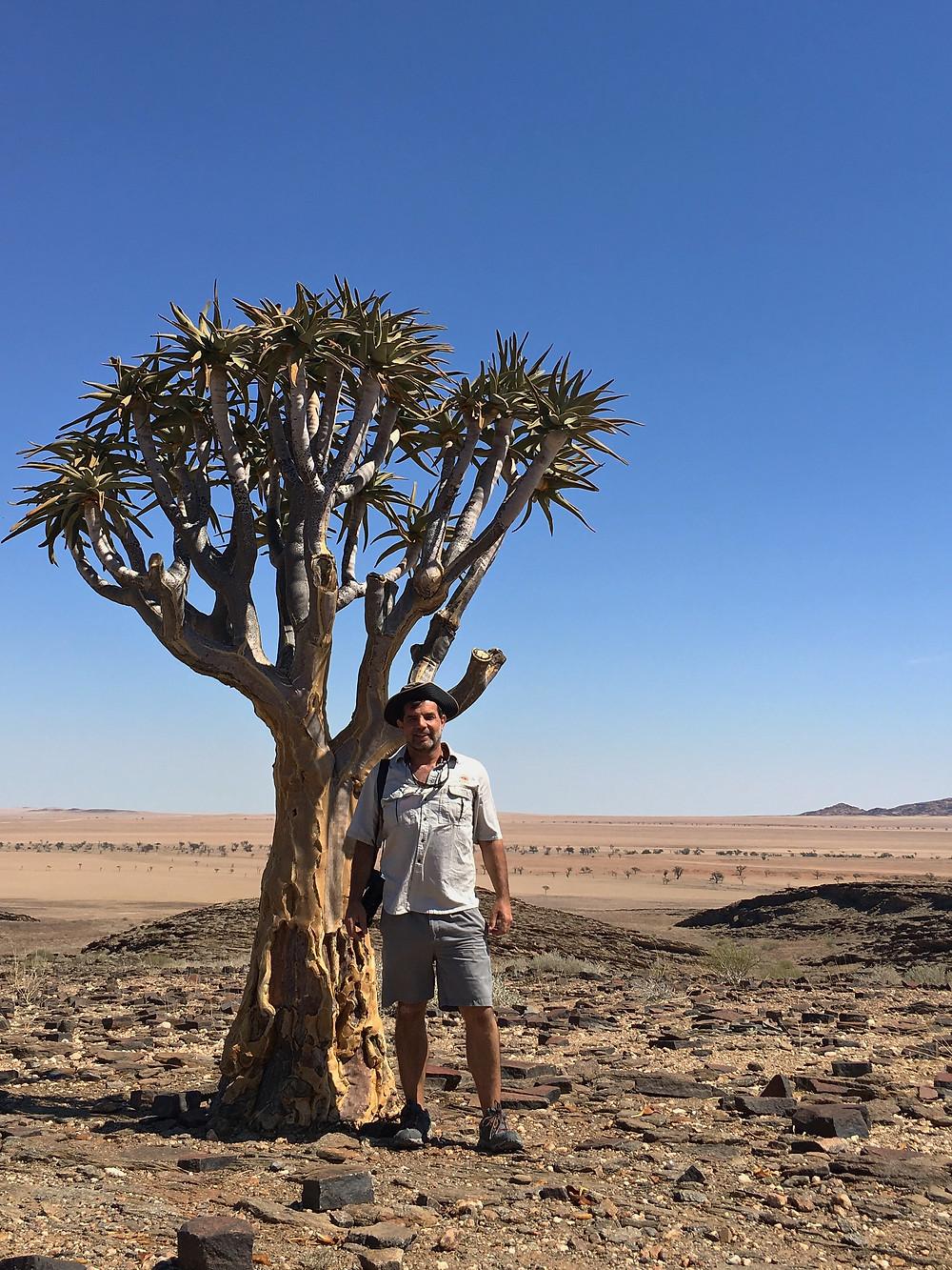 Aloe dichotoma, Namibia