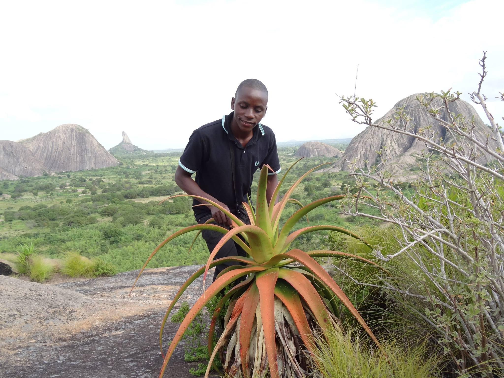 aloe mawii from Nampula