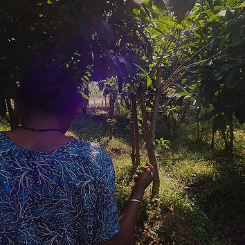 A_women_walking_through_shrubs.jpg