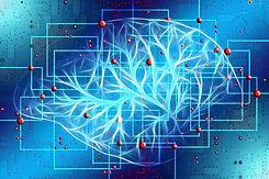 cerebro holistico.jpg