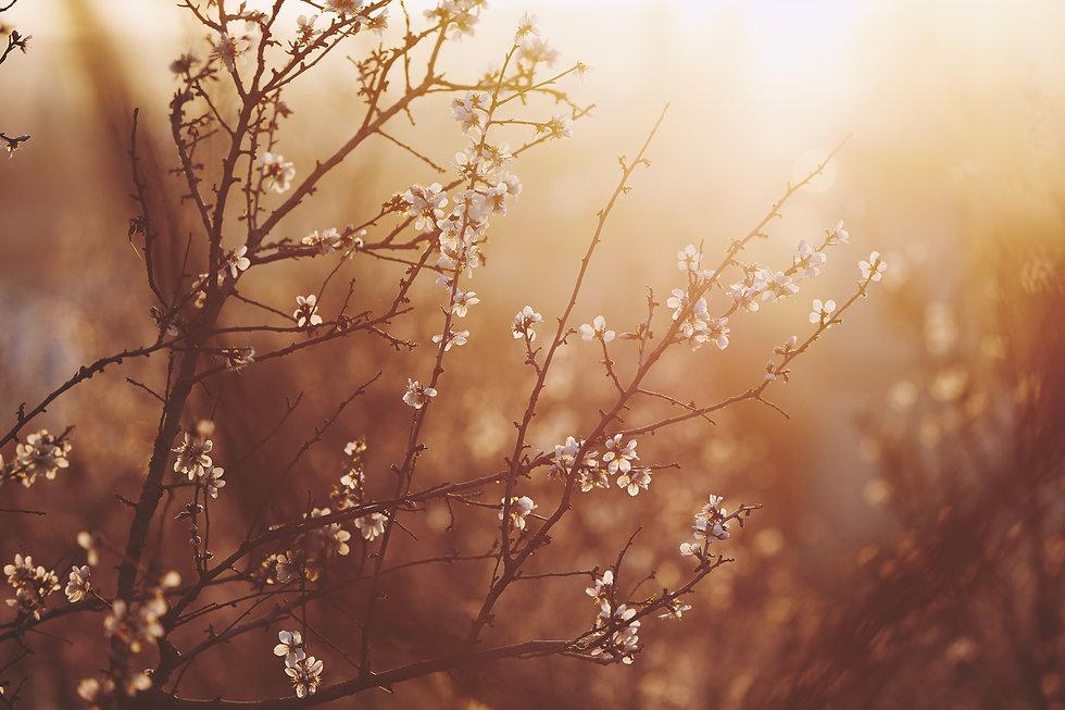 spring-in-nature-HEDJ8UV.jpeg