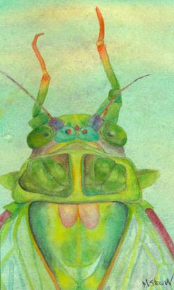 Cicada Portrait