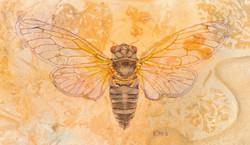 CicadaPrint