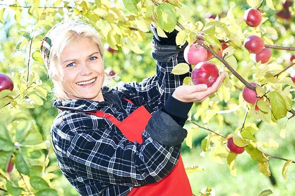 Woman picker portrait in apples orchard.jpg