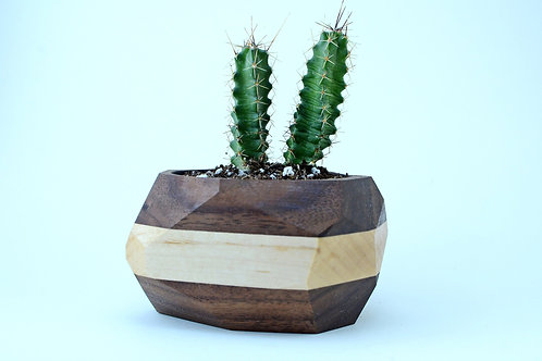 Geometric Cactus & Succulent Planter