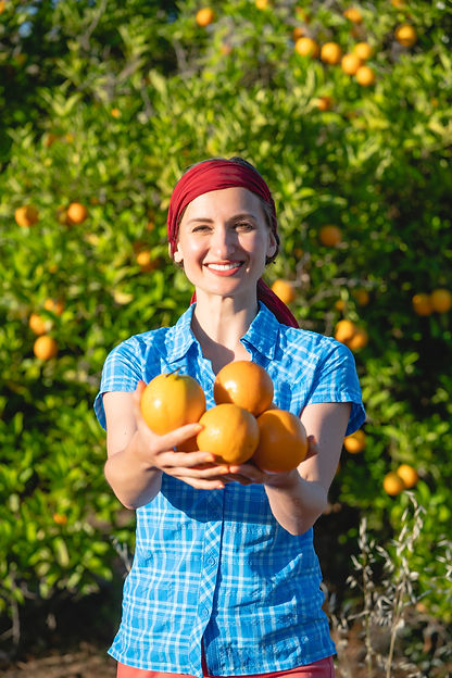 Farmer woman harvesting oranges in her o