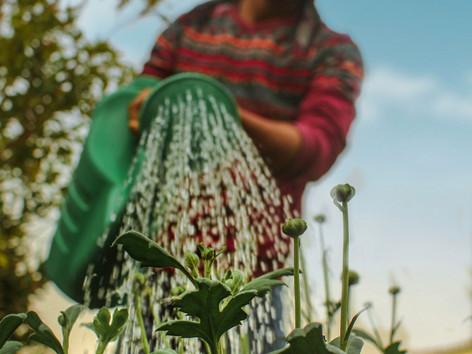 El pasto y la escasez de agua | Revista CONEXION EXPO CIHAC