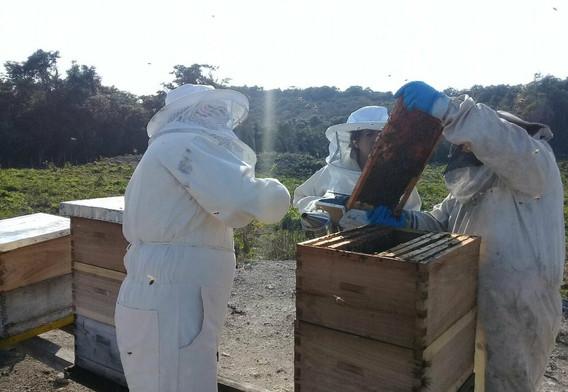 investigación proceso apícola