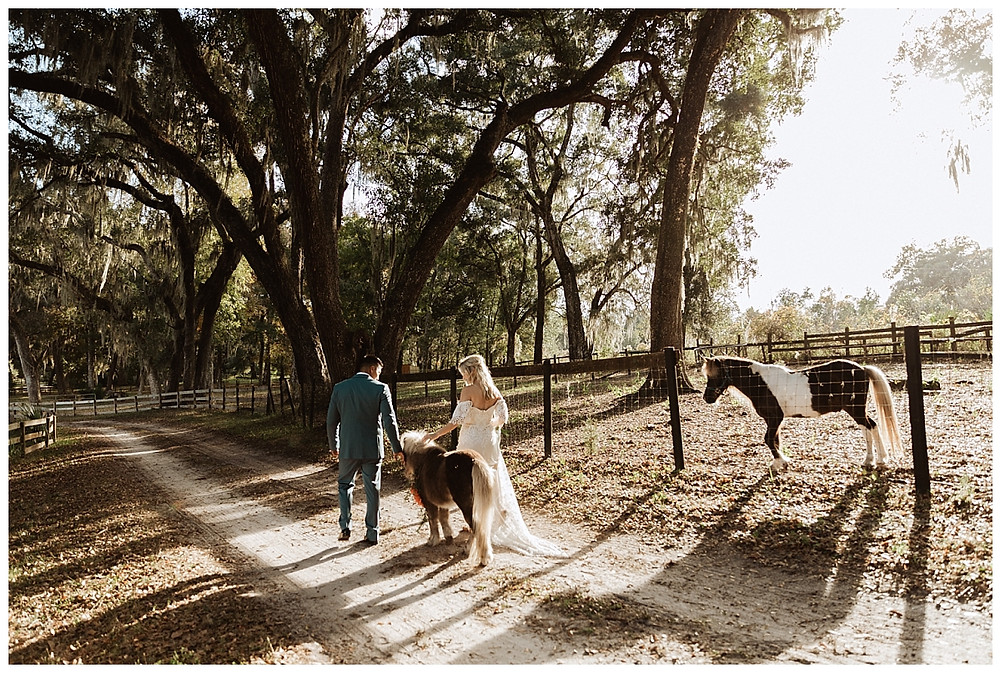 Boho Bride & Groom Portraits with Mini Horse on Enchanted Oaks Farms, Ocala Florida