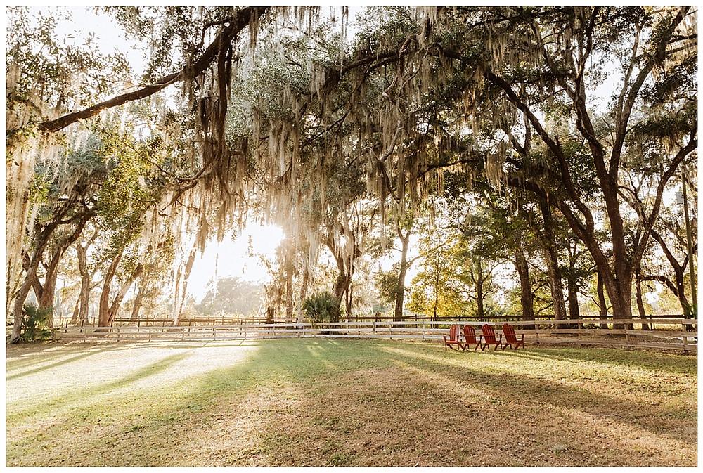 Spanish Moss Oaks at Enchanted Oaks Farm, Ocala Florida