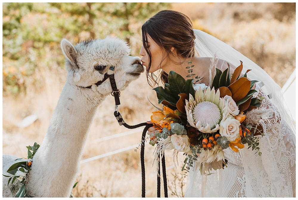 Rocky Mountain Elopement Boho Bridal Portraits with Alpacas