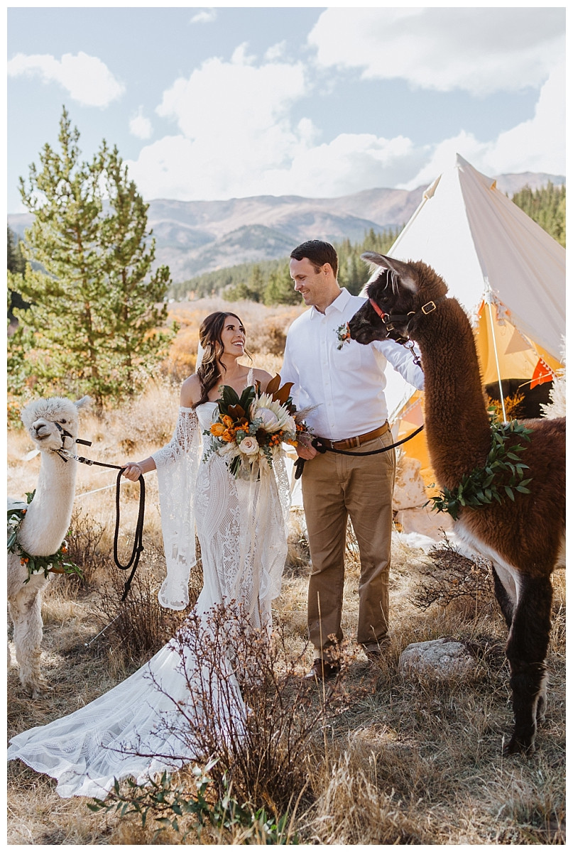 Rocky Mountain Elopement Boho Couples Portraits with Alpacas