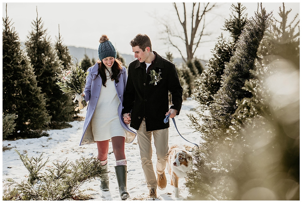 Couples Pre-Wedding Portraits at Vermont Tree Farm with Aussie Pup