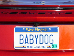 Final Babydog Drawing Deadline This Tues. Night