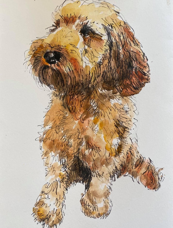 Pippa  A4 paper  Pen and Ink Wash