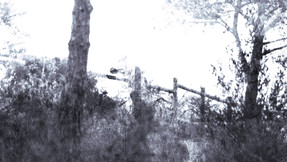 Isa bluish 6.jpg