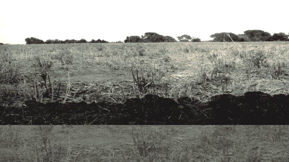 terra 14.jpg