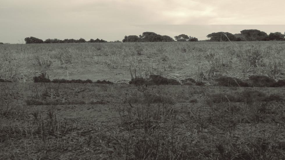 terra 12.jpg