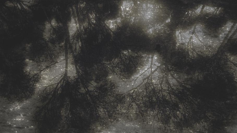 arbres 1.jpg