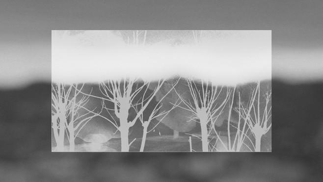 Bustos arbres 4.jpg