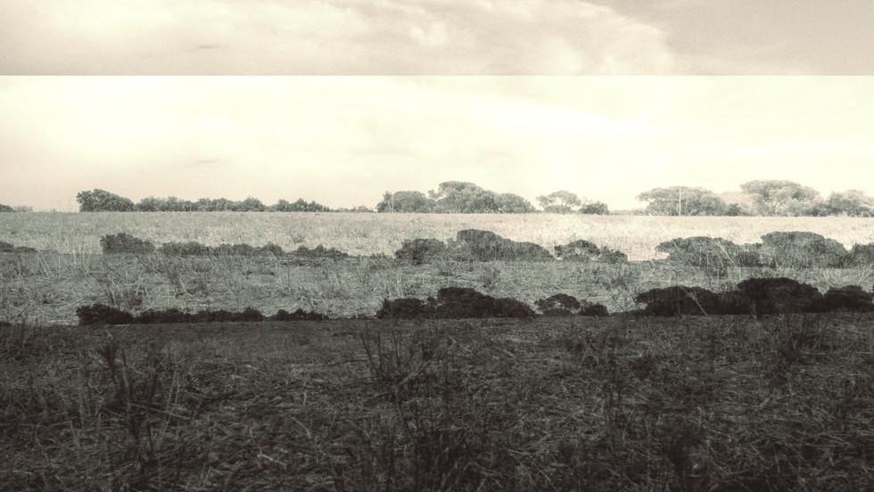 terra 19.jpg