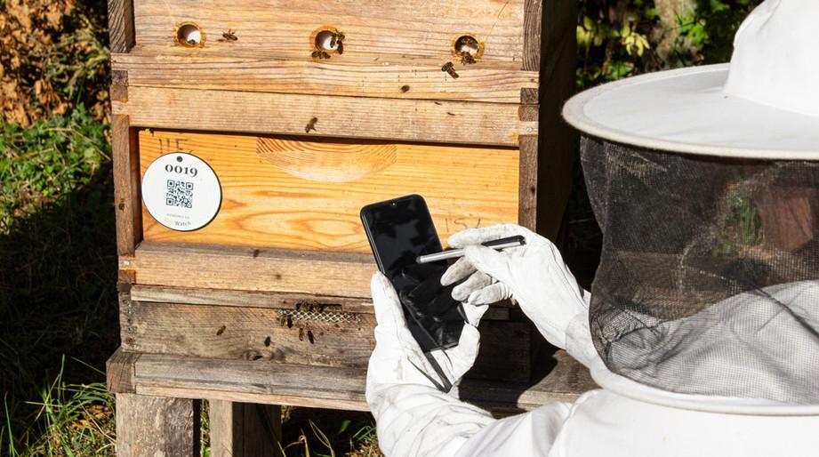 Beehive photography