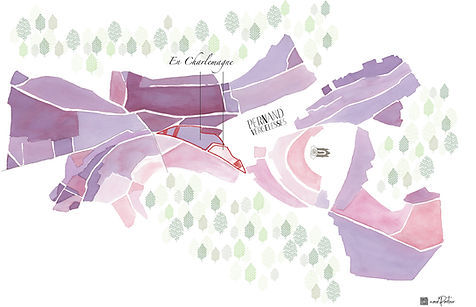 Carte Rouge corton Domaine Pavelot copie