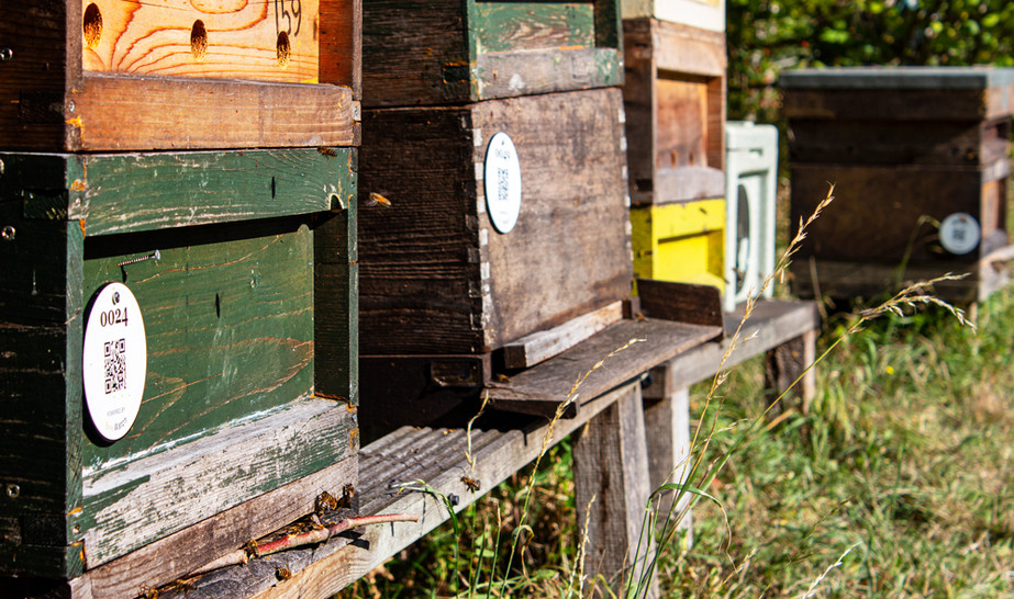 Beehives photography