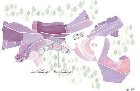 Carte blanc Corton charlemagne Domaine P