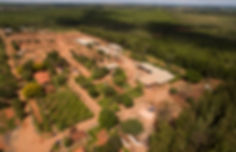 Geriza S&D Florestal