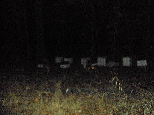 "The ""haunted"" farm"