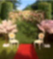 Wedding decor to hire/ rent Flower Wall with pink blossom trees, red carpet and bridal wedding chairs