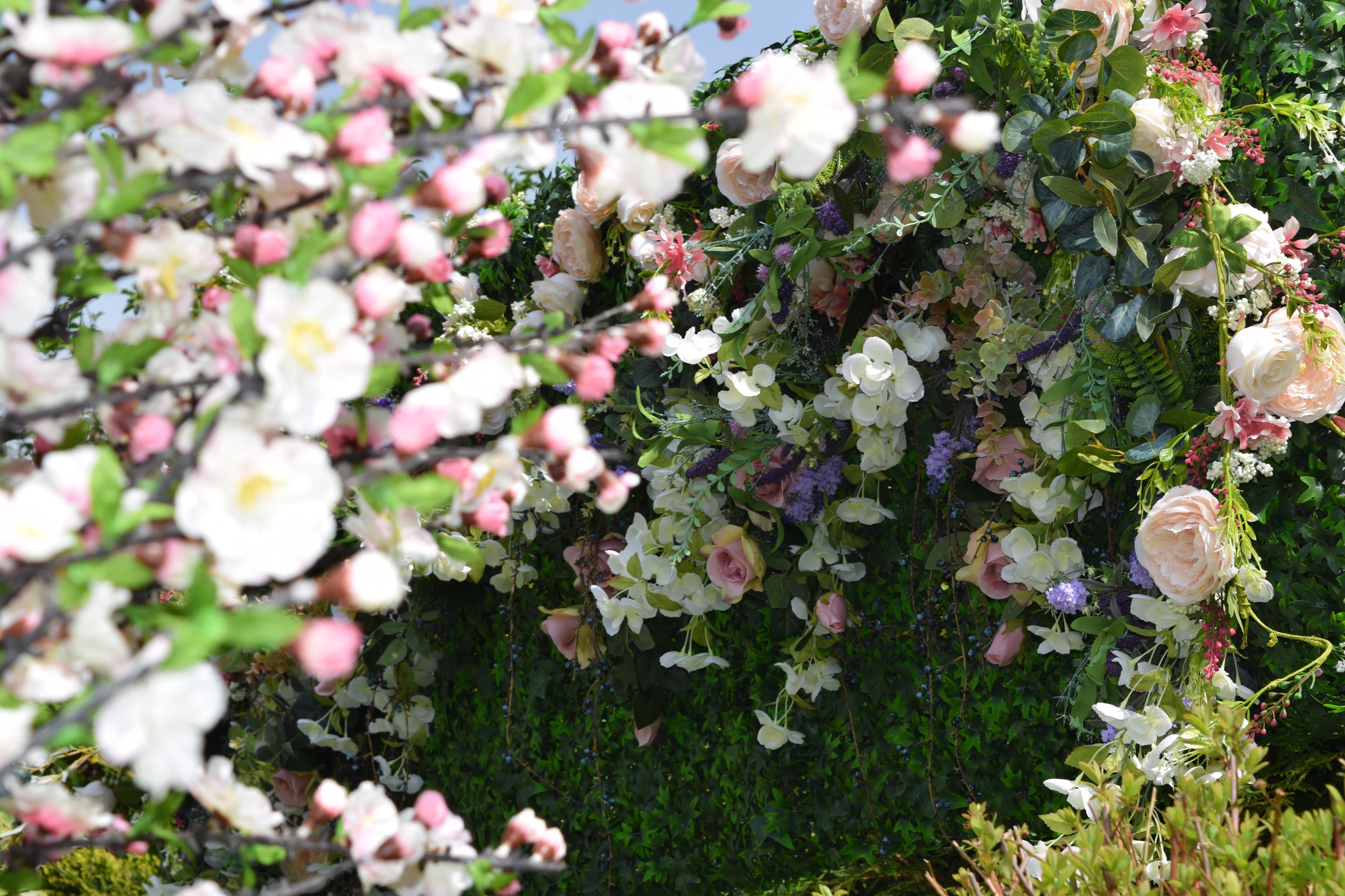Peach blossom tree