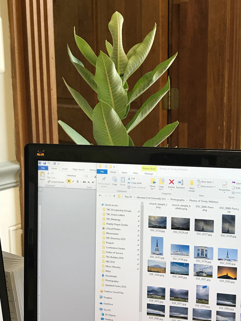 Large plant in a vase on my desk :)