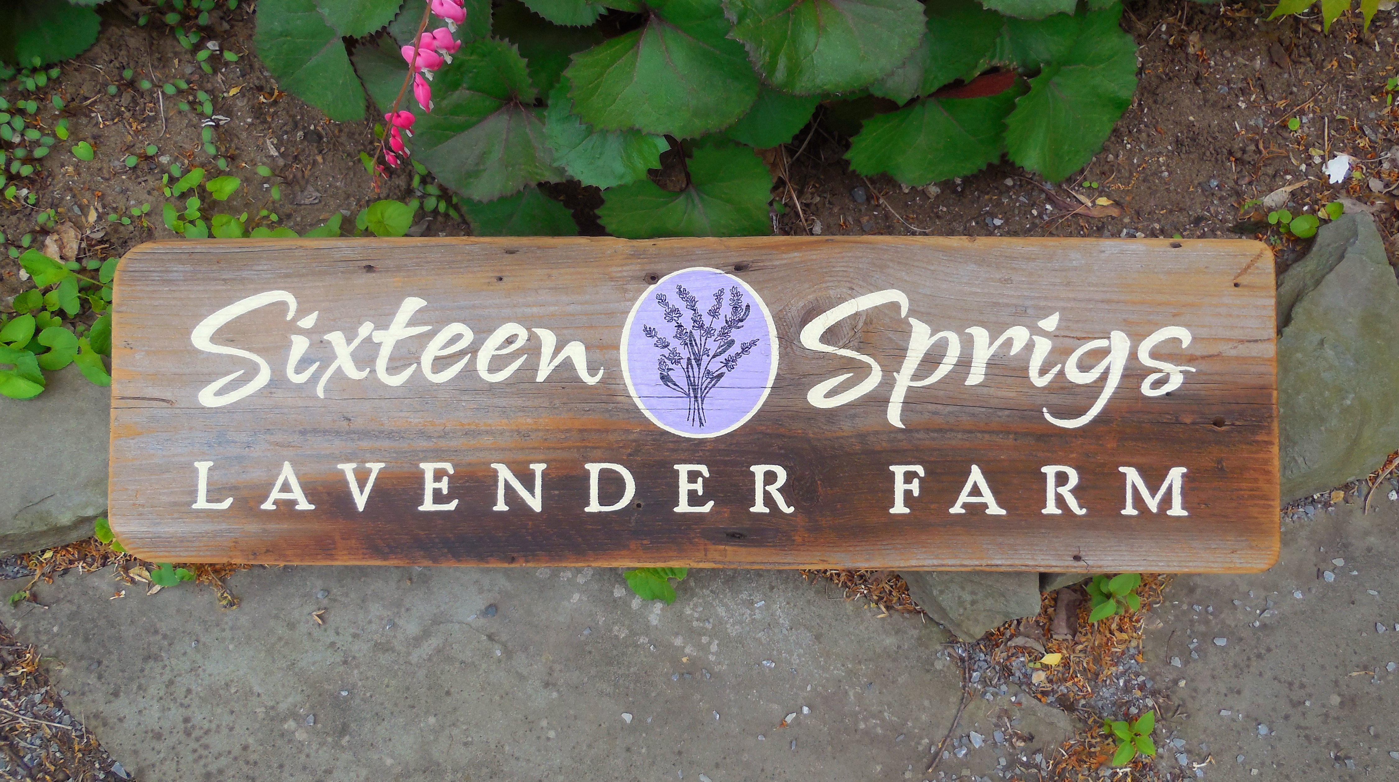 Farm_SixteenSprigsLavender