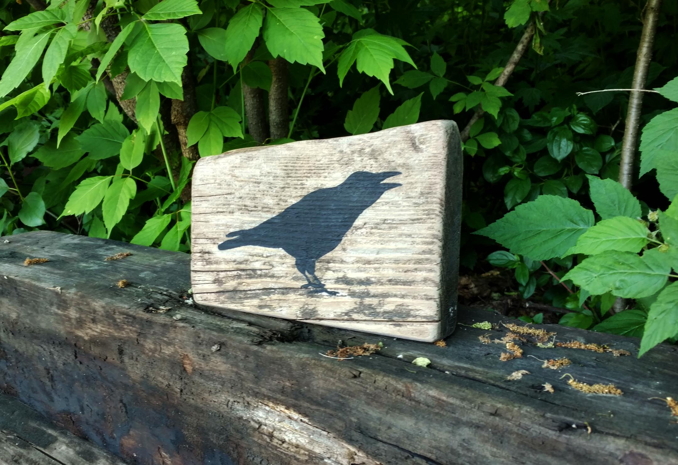 Crow_sitter3